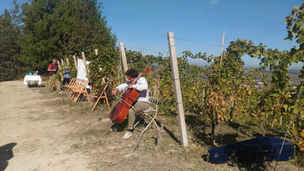 Violinista nelle vigne di Cantina Cerutti
